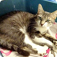 Adopt A Pet :: Joanie - Belleville, MI