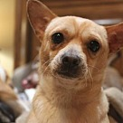 Adopt A Pet :: Prince - Denton, TX