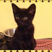Adopt A Pet :: Panther - Marianna, FL
