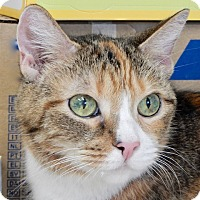 Adopt A Pet :: Leilana - Long Beach, NY