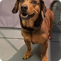Adopt A Pet :: HARLEY - Tucson, AZ