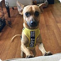 Adopt A Pet :: Buddy! - New York, NY