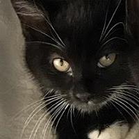 Adopt A Pet :: Sassaparilla - Island Park, NY