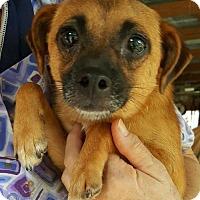 Adopt A Pet :: Carlita - Baileyton, AL