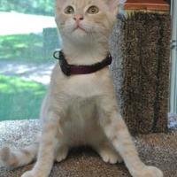Adopt A Pet :: Gabe - Waco, TX