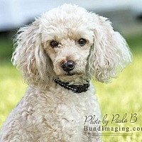 Adopt A Pet :: Barkley - Courtice, ON