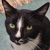 Adopt A Pet :: Chester Goode - Nashville, IN