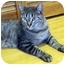 Photo 2 - Domestic Shorthair Cat for adoption in Quail Valley, California - Willow