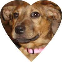 Terrier (Unknown Type, Medium) Mix Puppy for adoption in Herndon, Virginia - Roxy