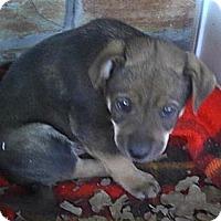 Adopt A Pet :: Loki - Ranger, TX