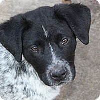 Adopt A Pet :: Sammy - PENDING, in Maine - kennebunkport, ME