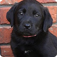 Adopt A Pet :: *Jilly - PENDING - Westport, CT