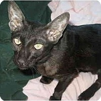Adopt A Pet :: Lexie - Beverly Hills, CA