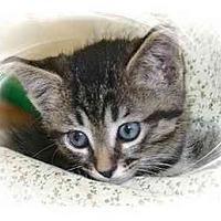 Adopt A Pet :: Phoebe - Montgomery, IL