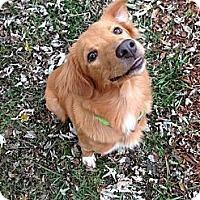 Adopt A Pet :: Brook - Foster, RI
