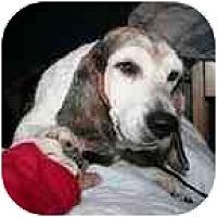Adopt A Pet :: Bessie - Portland, OR