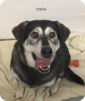 Husky Mix Dog for adoption in Hibbing, Minnesota - Chi Chi