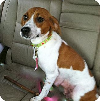Hound (Unknown Type) Mix Dog for adoption in Rockville, Maryland - Adelle**ADOPTION PENDING!!**