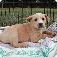 Adopt A Pet :: Neptune $250 - Seneca, SC