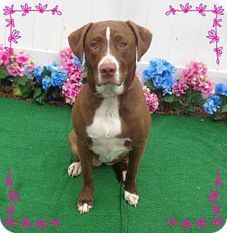 Labrador Retriever Mix Dog for adoption in Marietta, Georgia - ZOE (R)