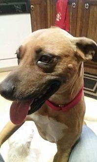 Rhodesian Ridgeback Mix Dog for adoption in Jetersville, Virginia - Hazel