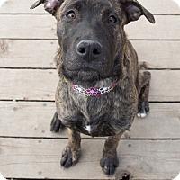 Adopt A Pet :: Hazel - Drumbo, ON