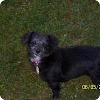 Adopt A Pet :: Annabelle - Coldwater, MI