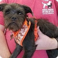Adopt A Pet :: EZEKIEL - Phoenix, AZ