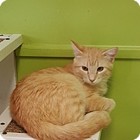 Adopt A Pet :: Heckle - Americus, GA
