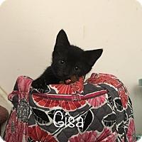 Adopt A Pet :: Gisa - Woodbury, NJ