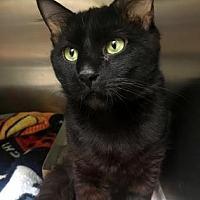 Adopt A Pet :: Einstein - Philadelphia, PA