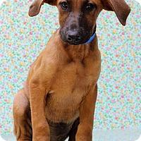 Adopt A Pet :: Amos - Waldorf, MD
