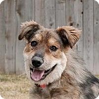 Adopt A Pet :: JJ - Denver, CO