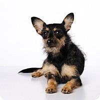 Adopt A Pet :: Cora *special needs* - Carlsbad, CA