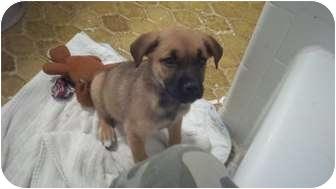 Shepherd (Unknown Type) Mix Puppy for adoption in Cumming, Georgia - Opal