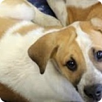 Adopt A Pet :: Rocky - justin, TX