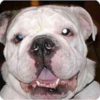 Adopt A Pet :: Munson - Winder, GA