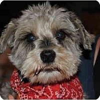 Adopt A Pet :: Louie - Los Angeles, CA