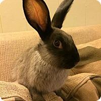 Adopt A Pet :: Carter - Williston, FL