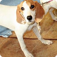 Adopt A Pet :: Princess- URGENT - Providence, RI