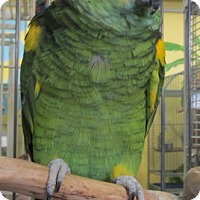 Adopt A Pet :: Elliot - Edgerton, WI