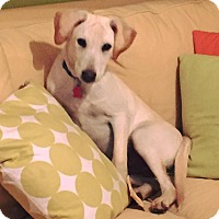 Adopt A Pet :: *Ozark - PENDING - Westport, CT