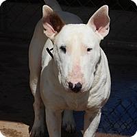 Adopt A Pet :: Elvis - Glenwood, AR
