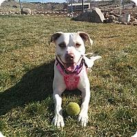 Adopt A Pet :: Chardonnay - Albuquerque, NM