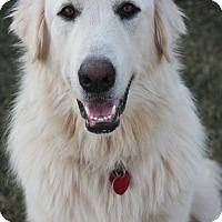 Adopt A Pet :: Rogue *Adopted - Tulsa, OK