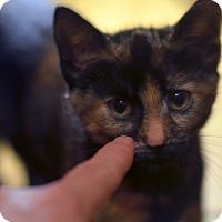 Adopt A Pet :: Cranberry - Brooklyn, NY