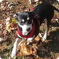 Adopt A Pet :: Nyssa - Dayton, OH - Dayton, OH