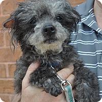 Adopt A Pet :: Clarence - Atlanta, GA