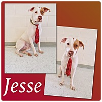 Adopt A Pet :: Jesse - Pawsitive Direction - Loxahatchee, FL