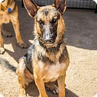 Adopt A Pet :: Liam - Phoenix, AZ